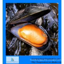 cheap frozen better quality sufficient half shell mussel