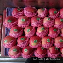 Qualidade padrão exportado de vermelho fresco Qinguan Apple