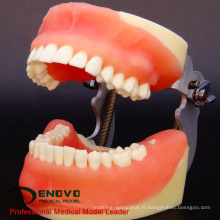 VENDRE 12608 Modèle de pratique de l'enseignement de la chirurgie buccale