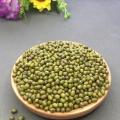 New High end Listing Green bean powder materials