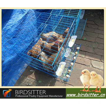Nigeria layer cage