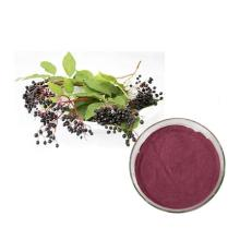 Organic Natural Black Elderberry Herbal Extract elderberry powder Flavones 1%