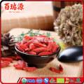 Growing goji berries goji berry powder where can you buy goji berries