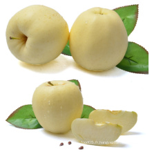 Chinese Golden Delicious Apple Fresh Apple