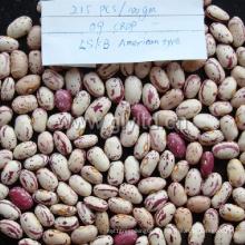 Leichte gesprenkelte Kidneybohnen-neue Ernte-hohe Qualität