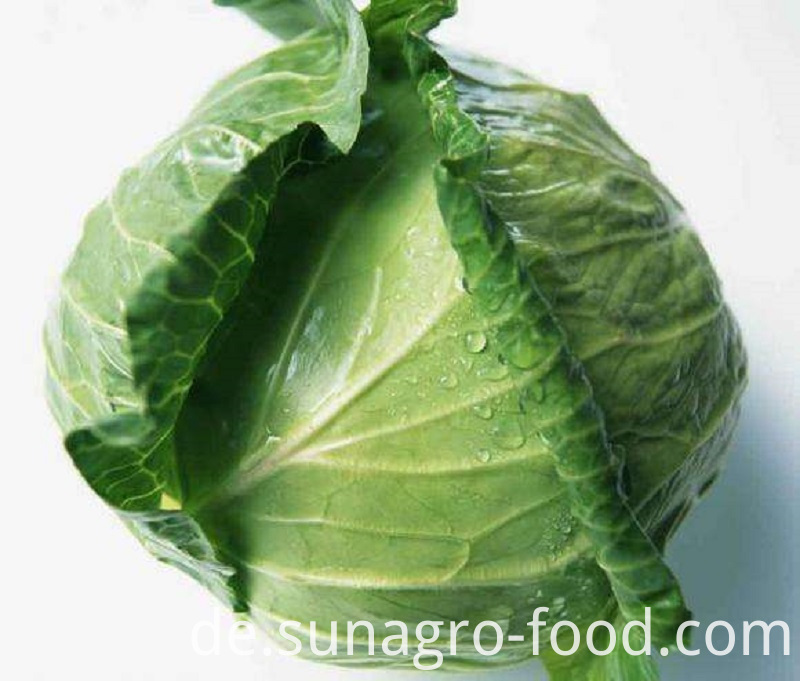 Good Quality Healthy Delicious Cabbage