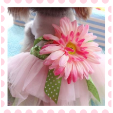 Doggy pet roupas para cães partido vestido de verão subiu vestido de noiva cachorro pet filhote de cachorro clothing