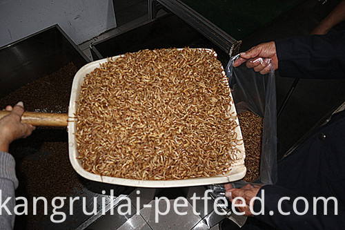 Nutritious Fresh Yellow Mealworm Feed