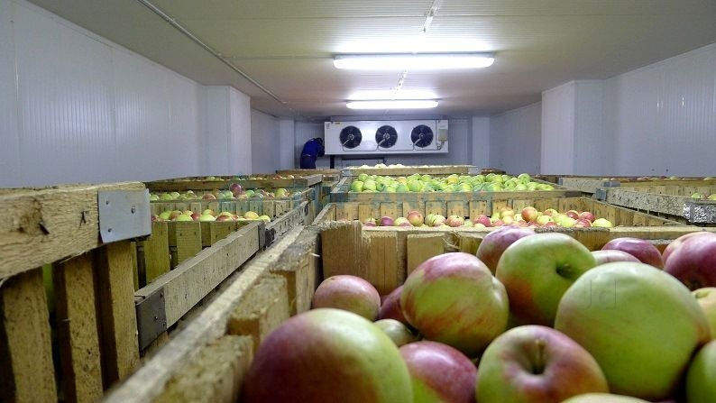 apple cold storage