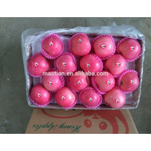 Fresh Style and Organic Cultivation Type fresh fruit Fresh Style and Organic Cultivation Type fresh fruit