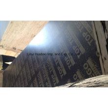 Contraplacado de cofragem / Núcleo de Álamo de Contraplacado Marinho para Usos Concretos