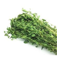 Кролик травы сено люцерны травы сено