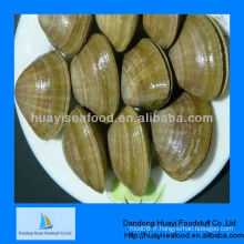 Frozen iqf fresh shell on surf clam