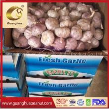 Hot Sales New Crop Chinese Garlic