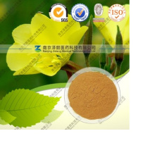 100% Pure Natural Fructus Forsythia Extract