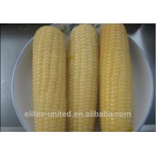 Frozen IQF Corn Cob Sweet Corn Cob