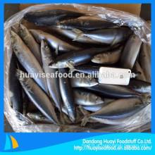 Congelado nova aterragem peixes de cavala de alta qualidade com baixo preço
