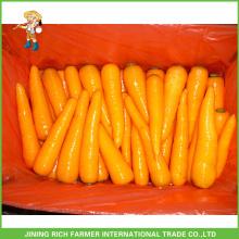 Good Quality Shandong Fresh Carrot