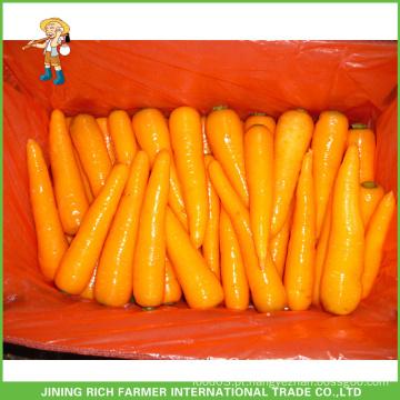 De Boa Qualidade Cenoura fresca de Shandong