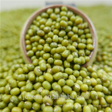qualidade superior Green Mung Beans sprouts / gernimation price