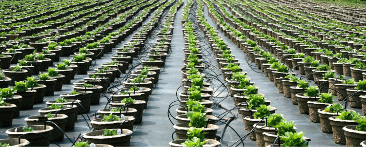 Drip Irrigation Potted-plants