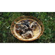 Dried Black Fungus White Back Wild Mushroom