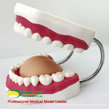 DENTAL03 (12562) Modelo de Escova de Dentes Gigantes da China Medical Anatomical Models