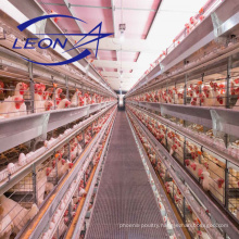 CE automatic poultry cage equipment manufacturer