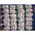Différentes tailles Normal White Garlic New Crop 2019