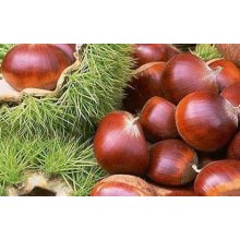 2016 New Season Fresh Chestnut em baixo preço China Origem