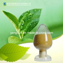 Natural Green Tea Extract Tea Polyphenol