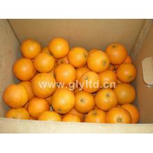Bonne qualité Orange douce et douce du nombril