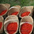 Medlar Health Food Himalayan Goji Berry