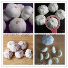 Fresh Garlic in Frozen