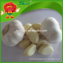 Wholesale Pure White Garlic best chinese garlic