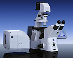 confocal laser scaning microscopy