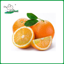 Navel orange Chinese Exportador