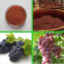 CAS No 84929-27-1 Skin Care Grape Seed Extract