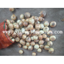 New Crop Fresh Yellow Onion From Shandong