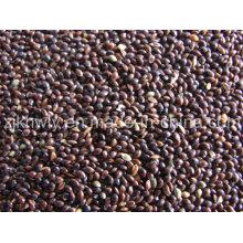 Millet Black Broomcorn