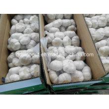 Китайский белый чеснок 800gx10bags / Carton