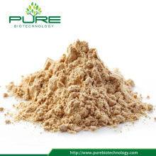 Naturlig Panax Ginseng Root Extract