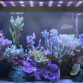 Aquarium-Licht-volle Spektrum-Riff-Koralle 300W LED