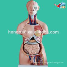 ISO 85CM Dual Torso de Sexo, Anatomia do Torso Model