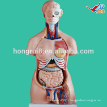 ISO 85CM Двойной торс туловища, анатомическая модель торса