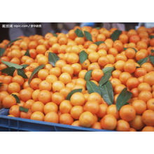 Small Size Orange