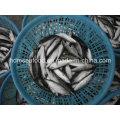 Замороженная рыба из скумбрии из морепродуктов (Scomber Japonicus)