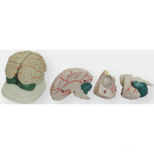 Le modèle anatomique du nouveau cerveau