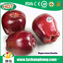 2014 Fresh Red Delicious Apples