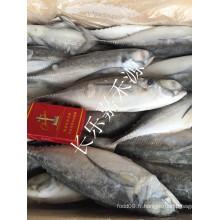 Vente en gros Chine Frozen Hard Tail Scad Price